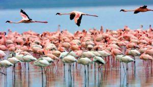 Flamingos Lake Nakuru National Park, Kenya
