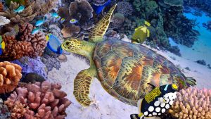 Coral Reef, Kenya