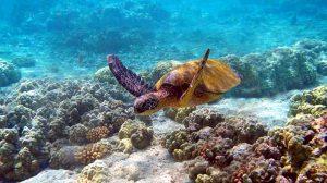 Sea Turtle. Kenya