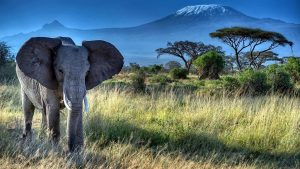 Monte Kilimanjaro Parco Nazionale Amboseli-Kenya Vacanze