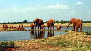 Elefanti Parco Nazionale Tsavo-Kenya Safari